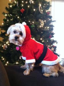 christmasdoggie